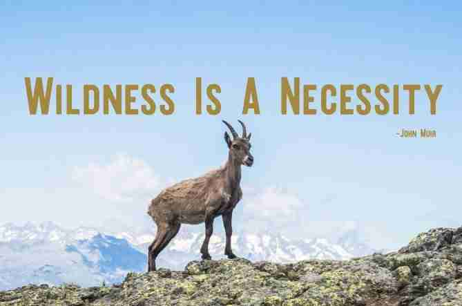 Quote By John Muir About Mountains And Wildness