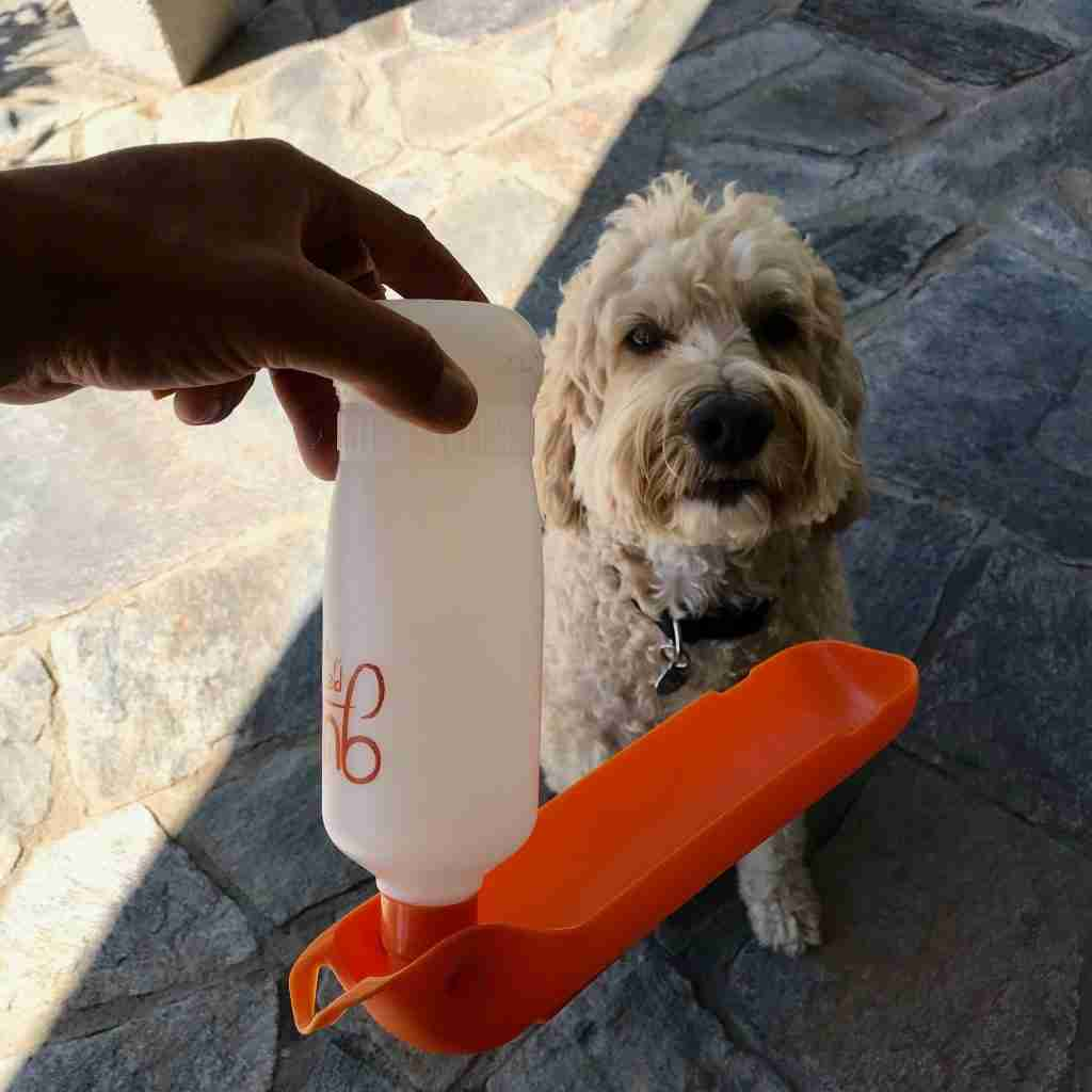 Gulpy Portable Water Bottle For Dogs