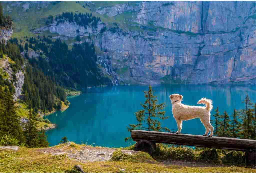 Dog Hiking By Lake To Stay Cool & Prevent Heat Stroke