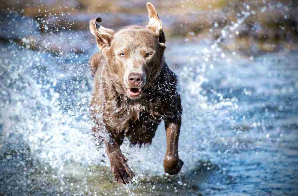 Dog Running In Water To Cool Down - Crux Range