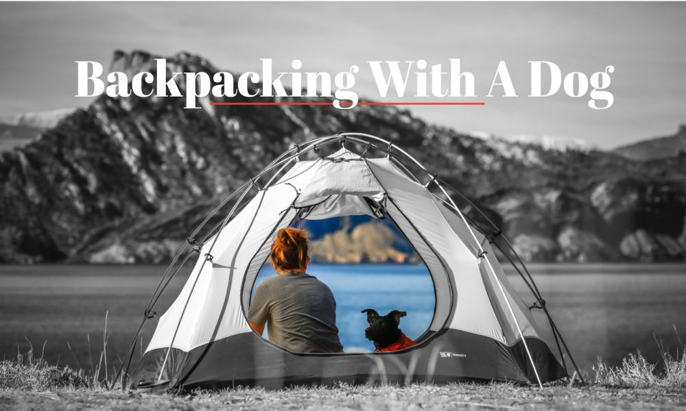 Complete Guide To Backpacking With A Dog - Crux Range